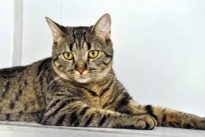 Chat au repos dans son box - Cat Etoiles