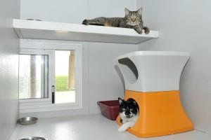 Box Cat Etoiles en colocation
